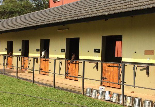 stables-L6FS976